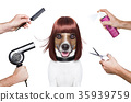 hairdresser dog 35939759
