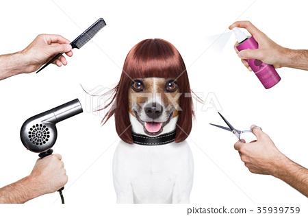 hairdresser dog 35939759