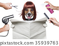 hairdresser dog 35939763