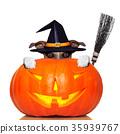 halloween pumpkin witch dog 35939767