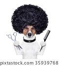 hairdresser  scissors comb dog 35939768