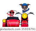 motorbike dogs 35939791