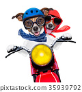 motorbike couple of dogs 35939792