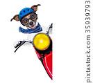 motorbike dog 35939793
