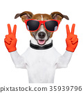 peace and victory fingers dog 35939796