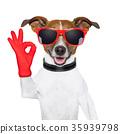 ok fingers dog 35939798