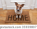 dog welcome home 35939807
