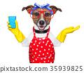 housewife dog 35939825