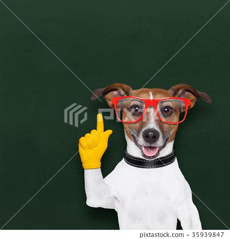 smart school dog 35939847