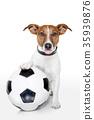dog with a white soccer ball 35939876