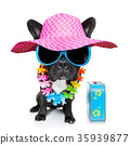 holiday summer dog 35939877