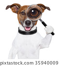 dog with magnifying glass 35940009