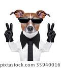 cool dog 35940016