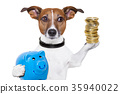 money saving dog 35940022