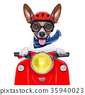 crazy silly motorbike dog 35940023