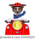 motorcycle dog 35940024