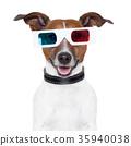 3d  glasses movie cinema dog 35940038