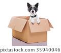 moving box dog 35940046