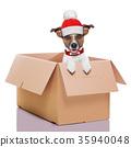 moving box winter dog 35940048
