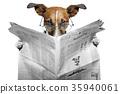 dog newspaper 35940061