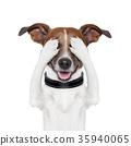 hiding covering eye dog 35940065