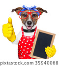 housewife dog 35940068