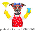 housewife dog 35940069