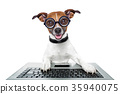silly computer dog 35940075