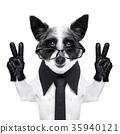 peace fingers dog 35940121