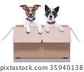 two mail dogs 35940138