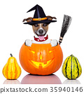 halloween dog as witch 35940146