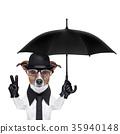 british dog  banner 35940148
