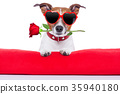 valentines day dog 35940180