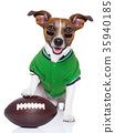 rugby dog 35940185