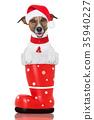动物 靴子 圣诞节 35940227