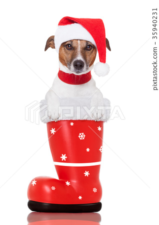 christmas dog in a red santa  boot 35940231