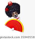 spanish dog 35940558