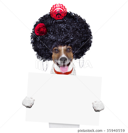 spanish dog 35940559