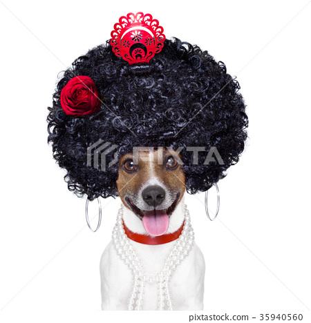spanish dog 35940560