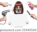 hairdresser dog 35940564