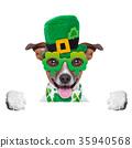 st patricks  day dog 35940568