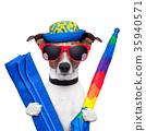 dog summer holidays 35940571