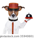 bellboy dog 35940601
