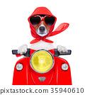 motorcycle dog summer dog 35940610