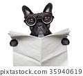 newspaper bulldog 35940619