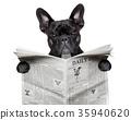newspaper bulldog 35940620