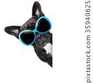 animal bulldog dog 35940625