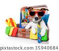 summer holiday dog 35940684