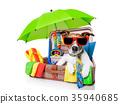 summer holiday dog 35940685