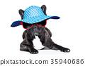 animal, banner, best 35940686